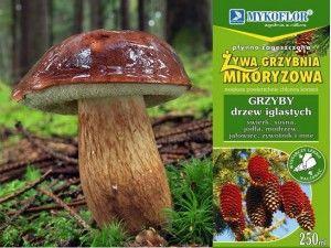 Promocja - Grzybnia Mikoryzowa BOROWIK MAŚLAK RYDZ