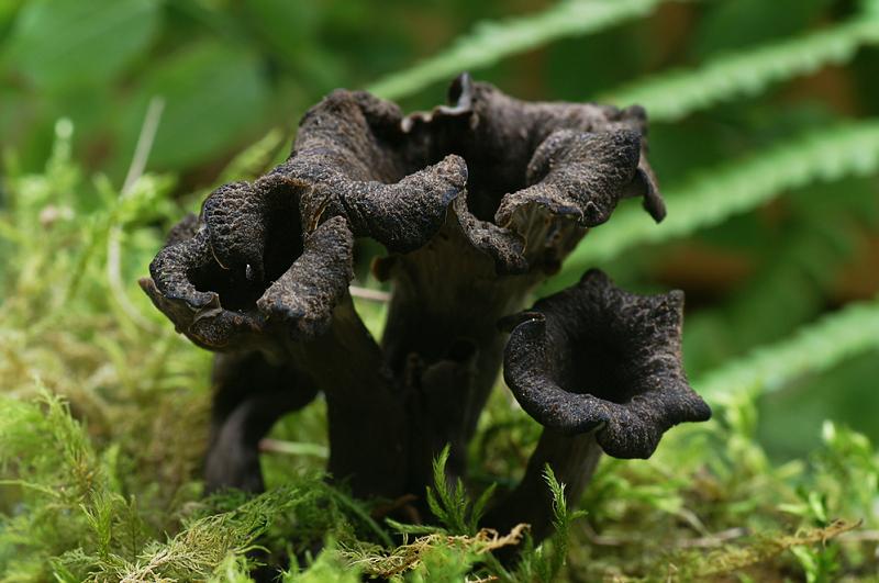 5 dziwnych grzybów, które spotkasz w Polsce