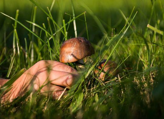 mushrooms artykul