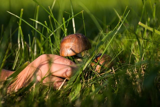 Dlaczego warto hodować grzyby?