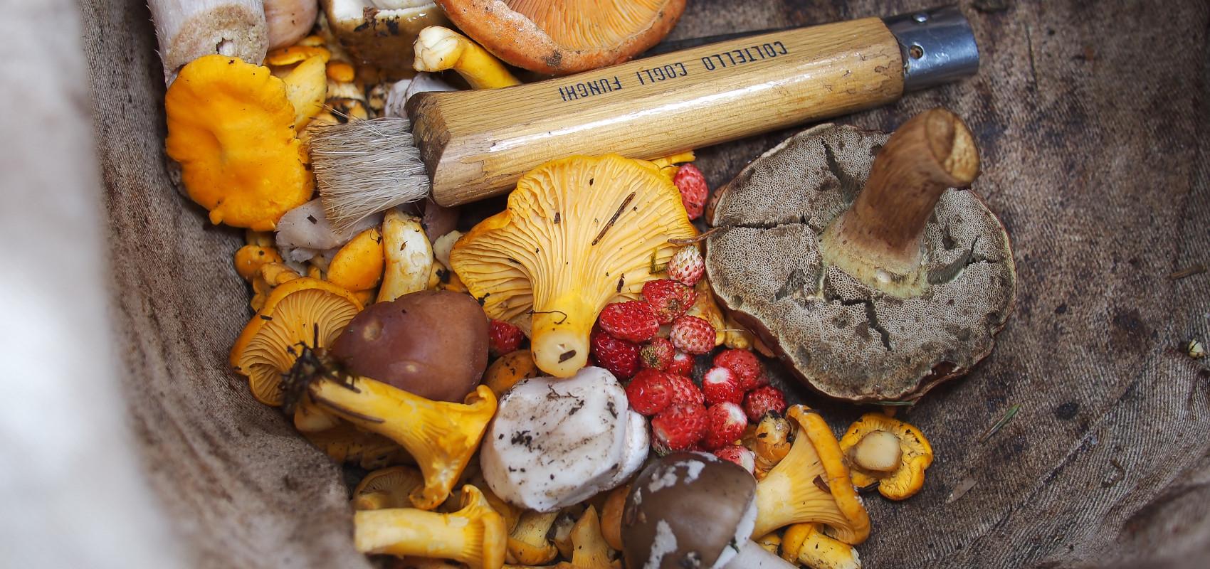 Przygotowania do jesiennych zbiorów – co trzeba zabrać
