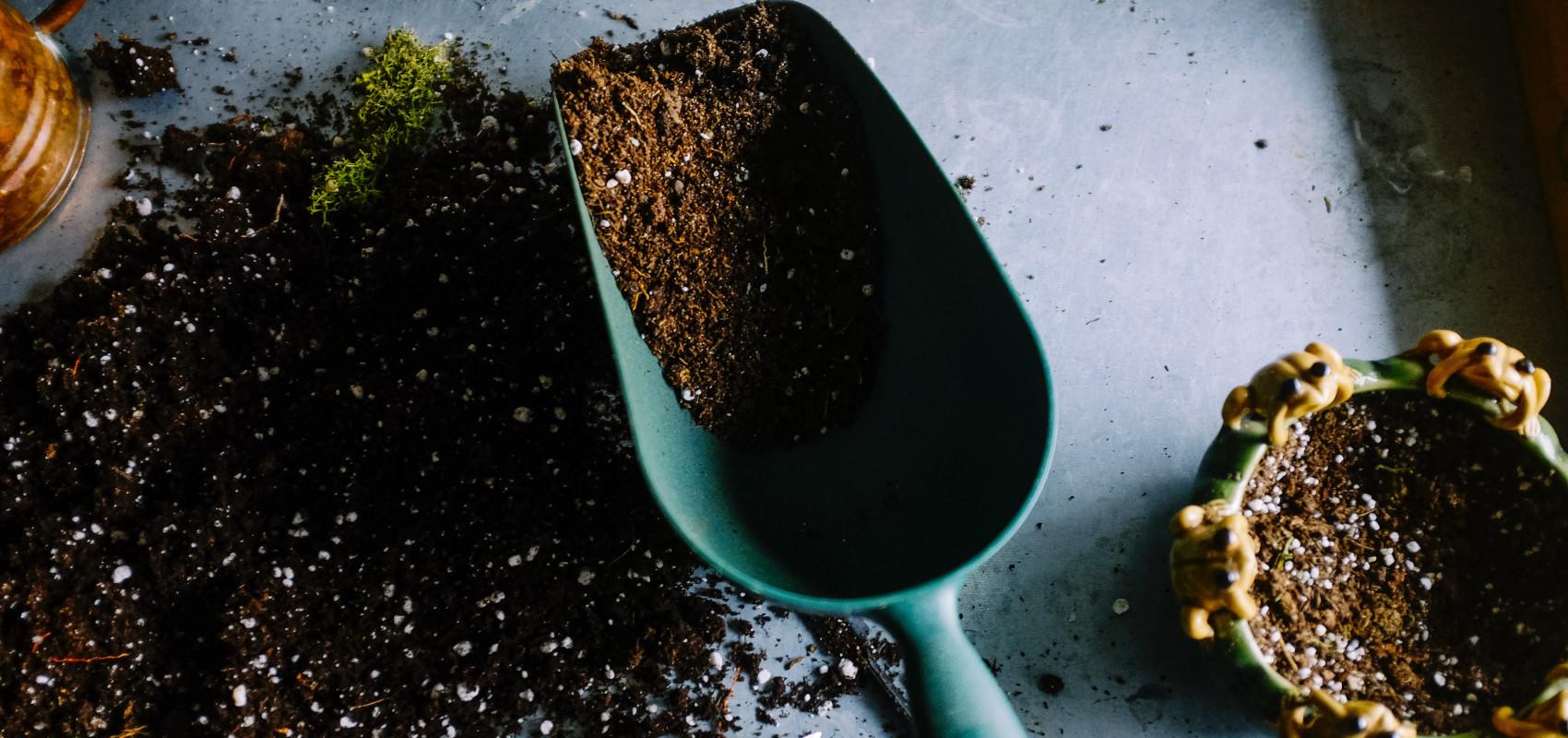 Jakie środki wspomagające rośliny wybrać, by mieć piękny ogród?
