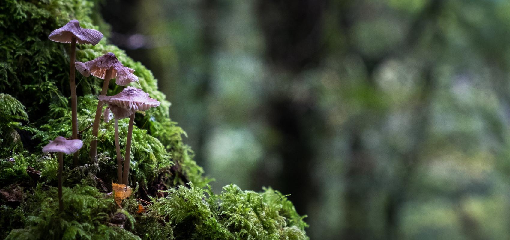 Mikoryza, czyli na czym polega partnerstwo grzybów i roślin
