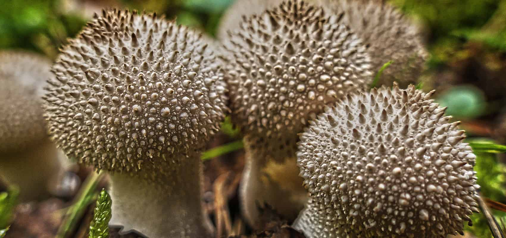 Mało znane, pyszne grzyby leśne